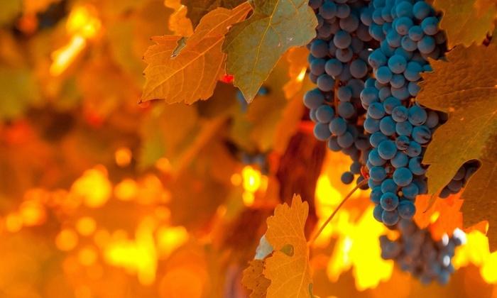 фотографии красивые осень