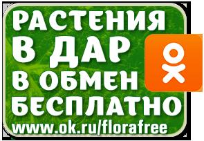 цветы бесплатно, florafree, саженцы бесплатно, растения даром, обмен луковичными, тюльпаны бесплатно, растения в дар в обмен бесплатно на одноклассниках/3041158_GreenSeries_florafree_ok (295x204, 72Kb)