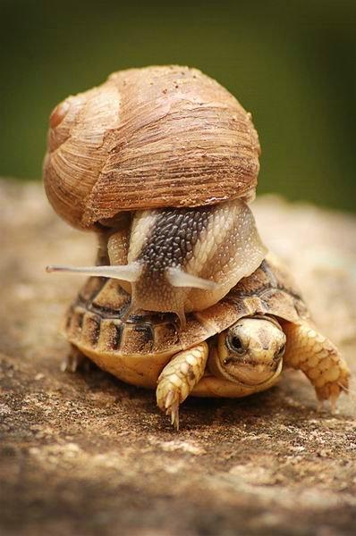 улитка и черепаха (398x600, 46Kb)
