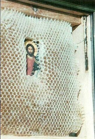 верующие пчелы 3 (326x480, 182Kb)