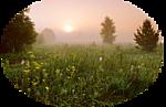 5230261_venetka_peizaj_lyg (150x97, 30Kb)