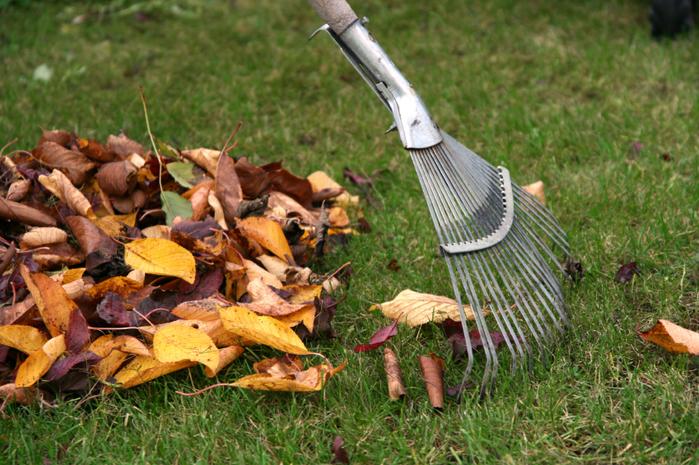 raking-leaves (700x465, 526Kb)