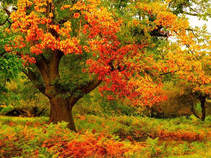 autumn_tree_colorful (700x525, 171Kb)