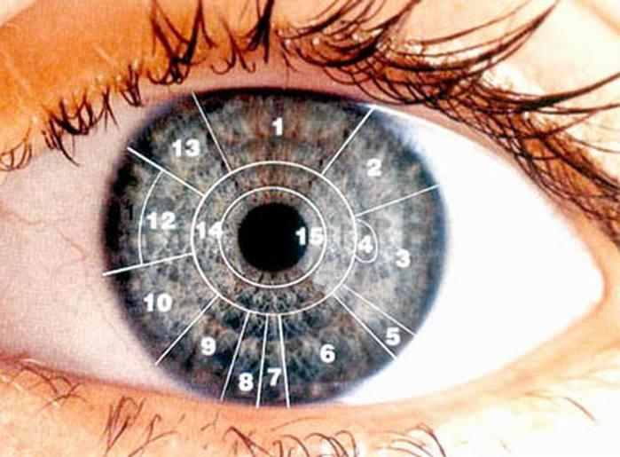 alt=Глаза-зеркало болезни/2835299_Glazazerkalo_bolezni (700x515, 54Kb)