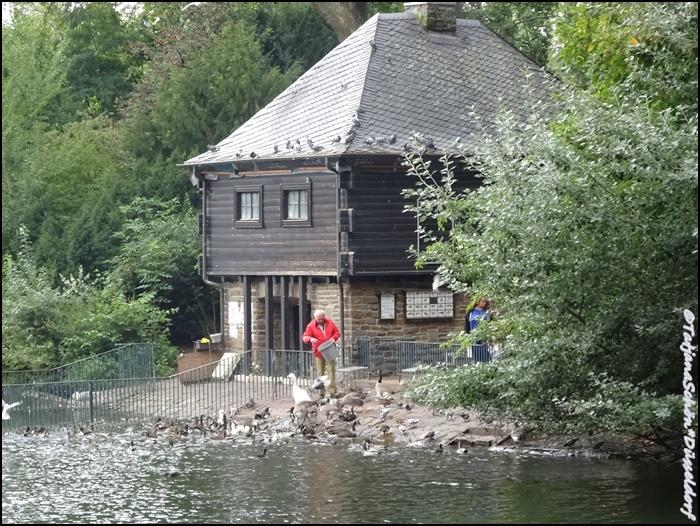 Фауна Дюссельдорфа. Водоплавающие.