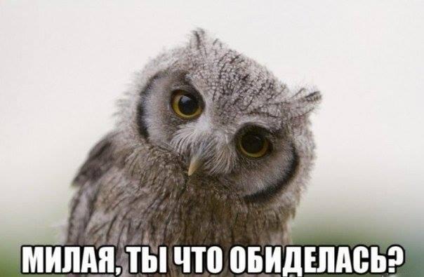 3577132_1_2_ (604x395, 28Kb)
