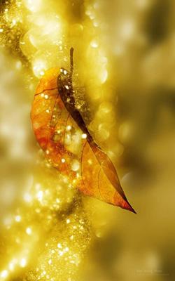 ава-золото-листьев (250x400, 37Kb)