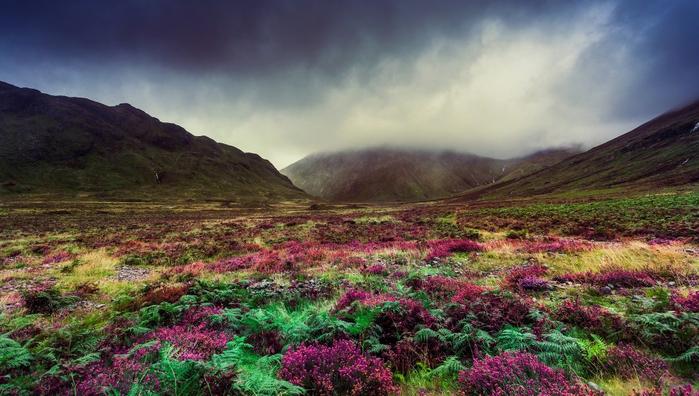 gory-dolina-cvety-priroda (700x396, 355Kb)