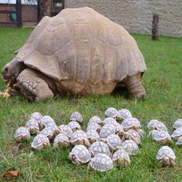 черепаха (600x600, 71Kb)