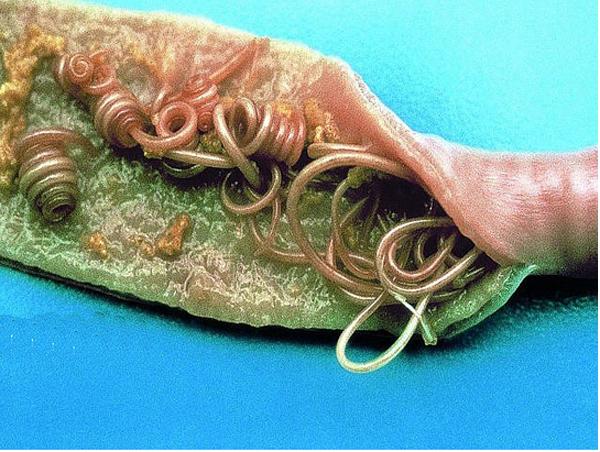 интохик от паразитов инструкция