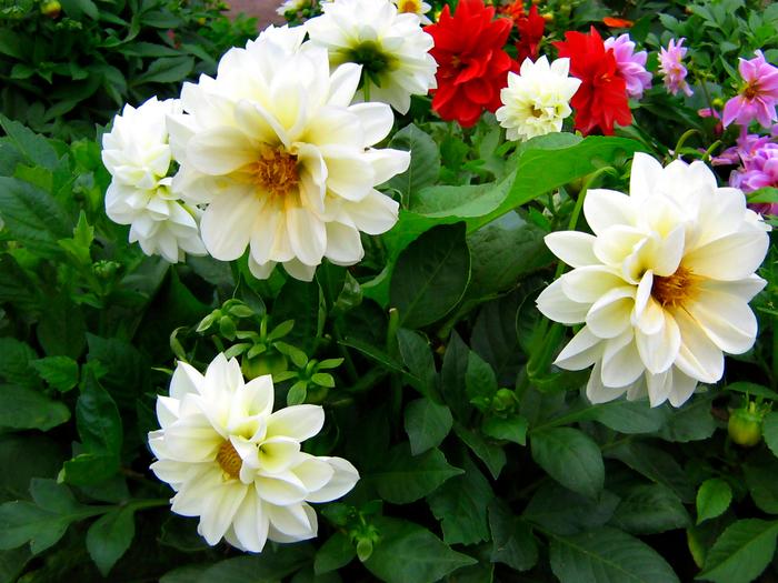 Осенние цветы vasily sergeev