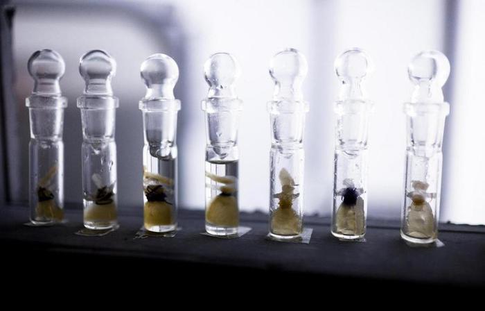 Современная безумная наука: жуткие техно художественные проекты