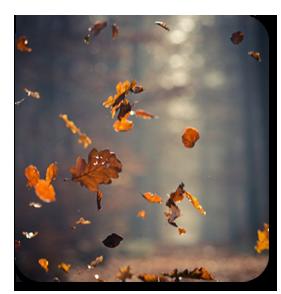 ава_листья (281x294, 105Kb)