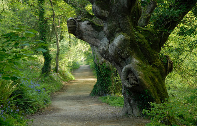 the-lost-gardens-of-heligan-035 (670x431, 110Kb)