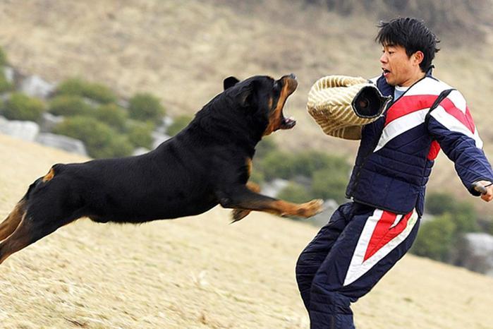Как действовать при нападении собак