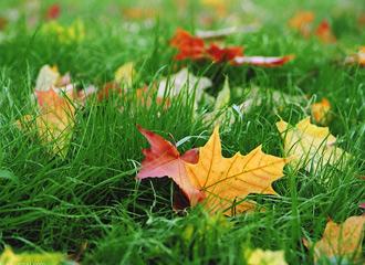 autumn_rus (330x240, 49Kb)