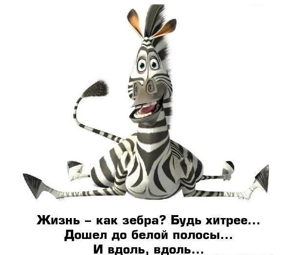 1353490874_zebra (600x524, 40Kb)