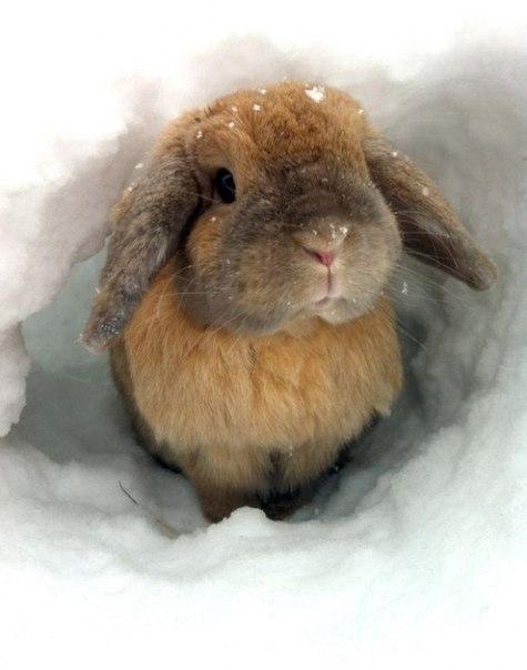 Снег и животные самое интересное в