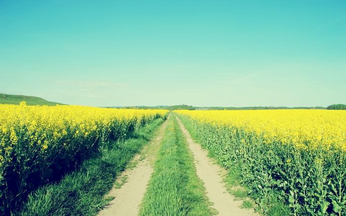 Дорога цветов картинки 7