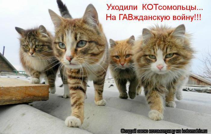 kotomatritsa_uM (700x444, 50Kb)