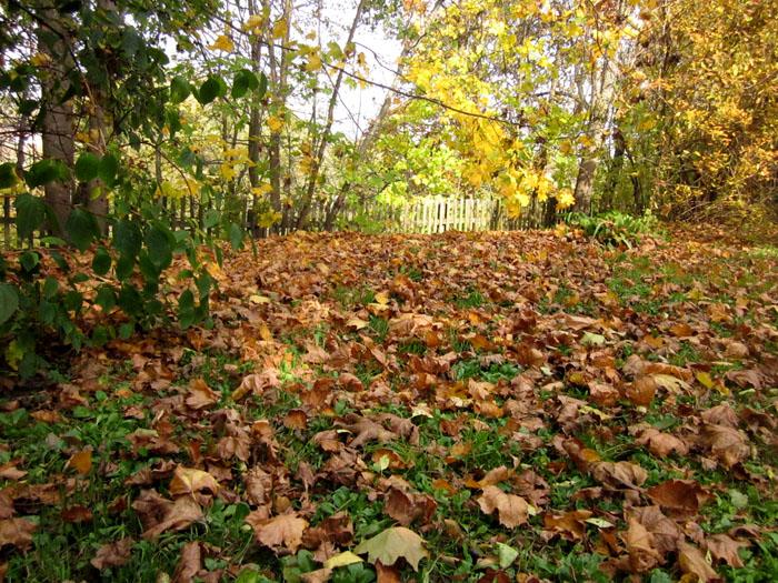 09 Листья сыпятся вниз, устилая траву (700x525, 233Kb)
