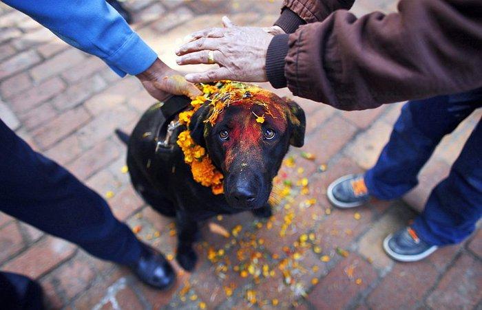 пёссио на празднике в Индии, 2 (700x451, 62Kb)