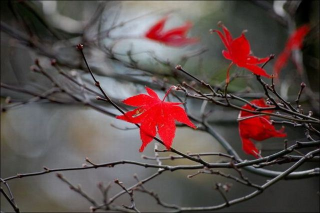 beautiful_fall_in_photos_14 (640x426, 39Kb)