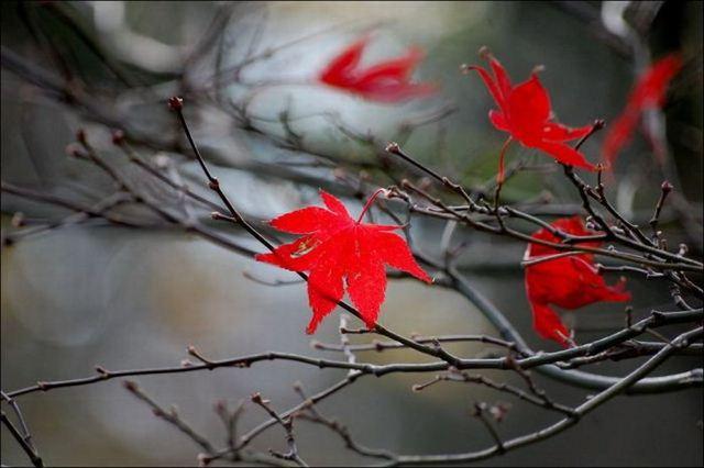 beautiful_fall_in_photos_14 (640x426, 39Kb)