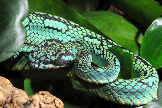 змея вяжем (635x425, 56Kb)