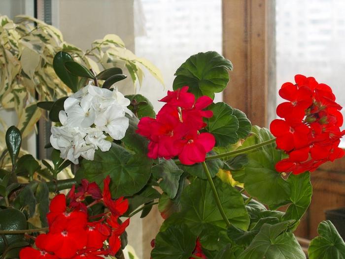 Комнатные цветы картинки для детей 7