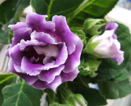 flower (456x369, 38Kb)