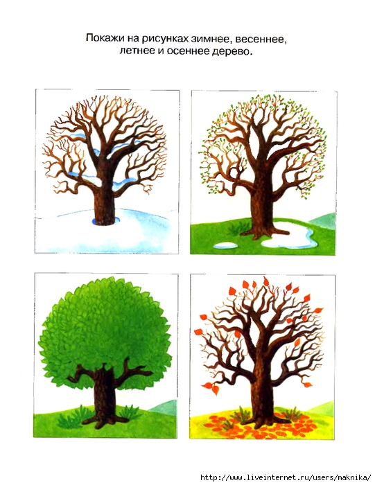 группе знакомство с деревьями в средней