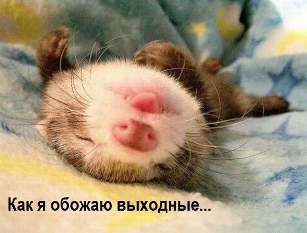 1353861543_vuyhodnuye (604x459, 62Kb)