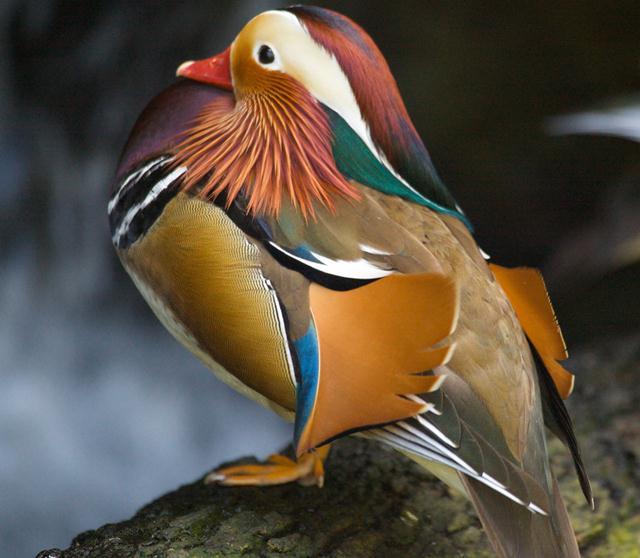 Захватывающие фотографии дикой природы