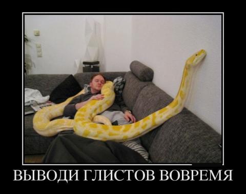 30894283_vyivodi-glistov-vovremya (480x378, 21Kb)