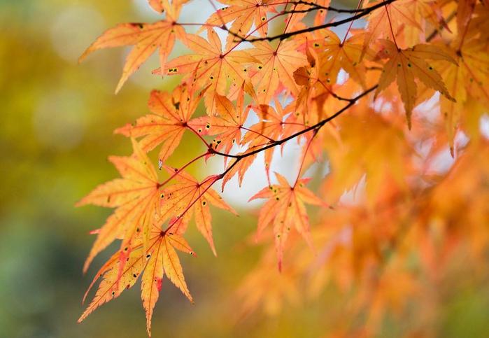 Осенний сад 700x483 128kb