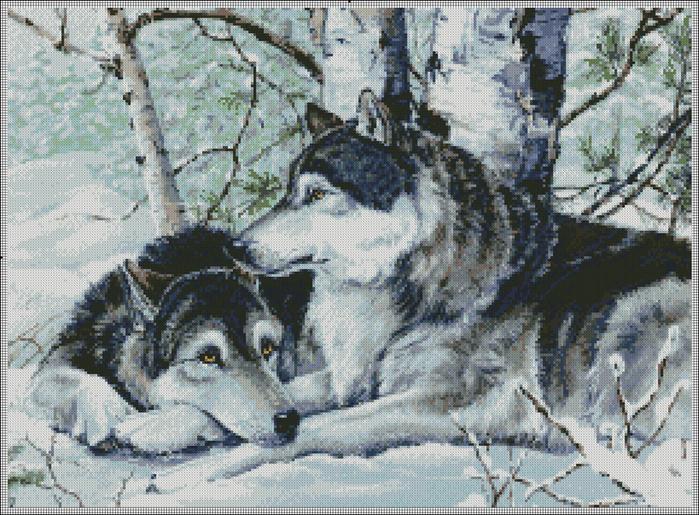 Волки в зимнем лесу.
