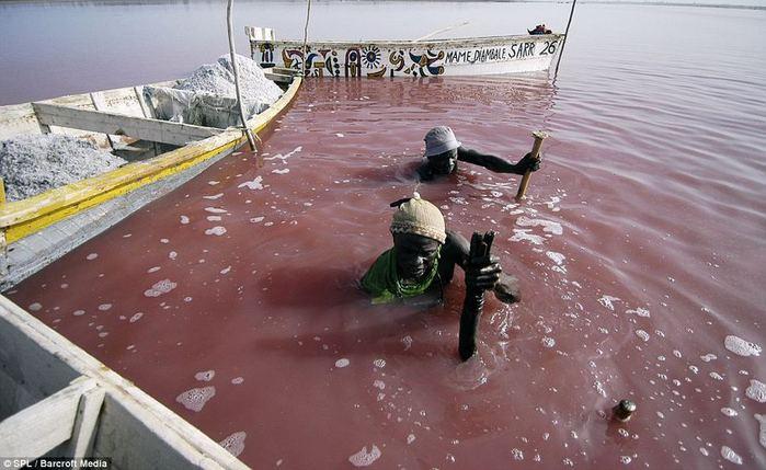 розовое озеро ретба в сенегале 3 (700x429, 59Kb)
