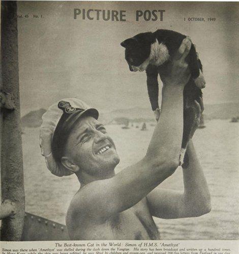 военный кот саймон фото 2 (470x500, 36Kb)