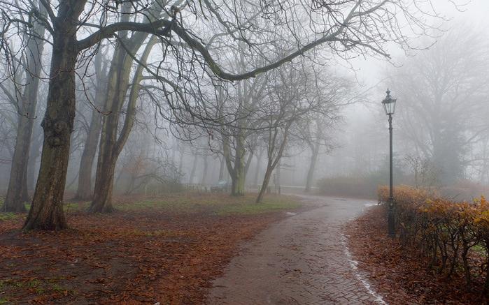 туманная осень 1