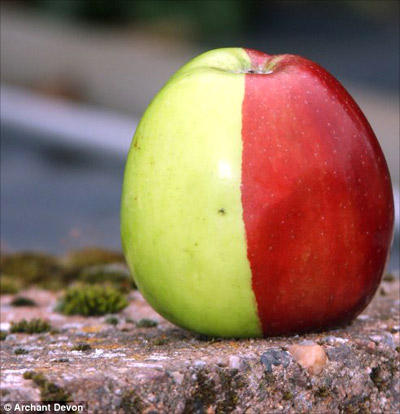 1254135374_apple-mutant-1 (400x414, 44Kb)