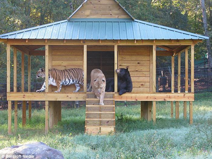 дружба животных фото (700x524, 226Kb)