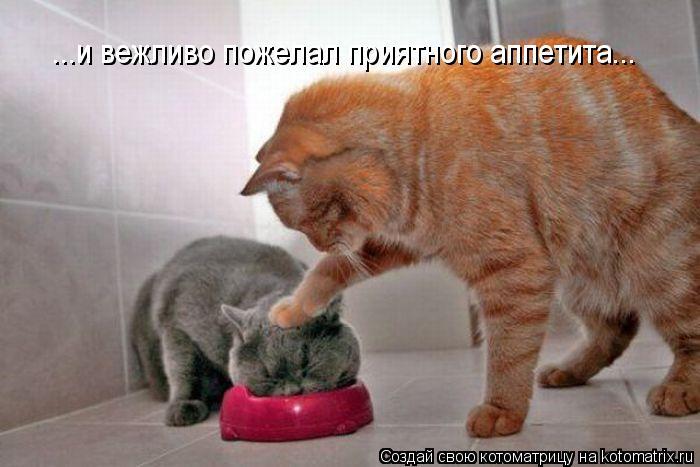 kotomatritsa_6P (700x467, 48Kb)