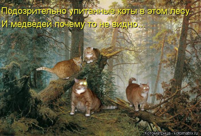 kotomatritsa_bq (700x474, 80Kb)