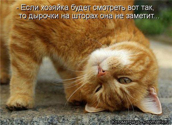kotomatritsa_cp0 (604x438, 52Kb)