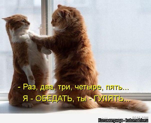 kotomatritsa_R (604x491, 55Kb)