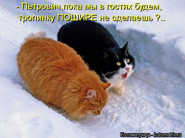 kotomatritsa_W (604x453, 52Kb)
