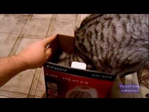 распаковка кота/3518263_hqdefault (480x360, 17Kb)