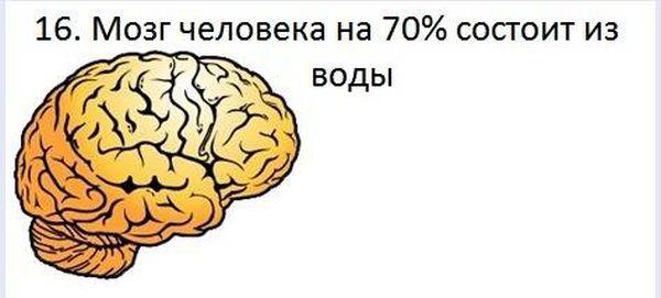 fakt_160 (600x271, 26Kb)