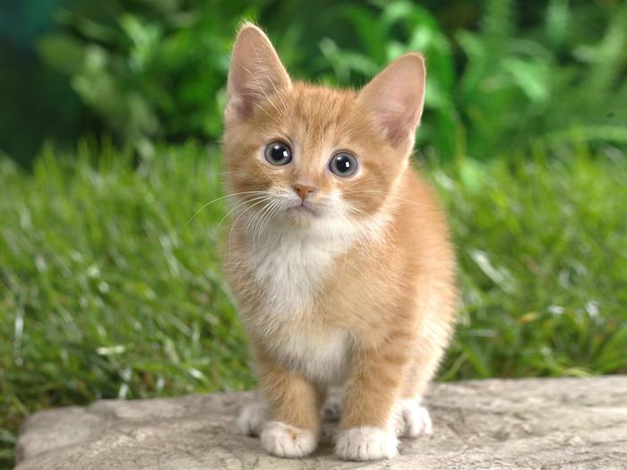 Cute-Cats-063 (700x525, 359Kb)
